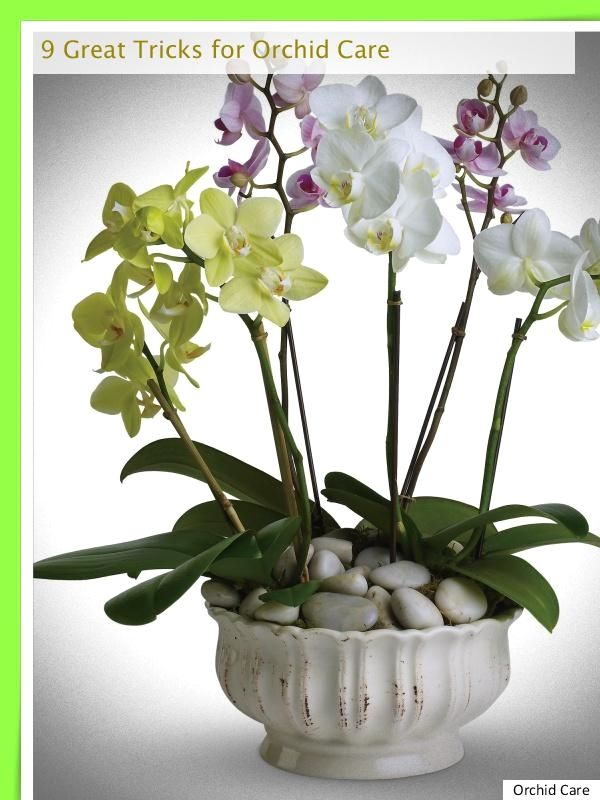 How To Avoid Orchid Rot Orchid Flower Arrangements Orchid Plants Plants
