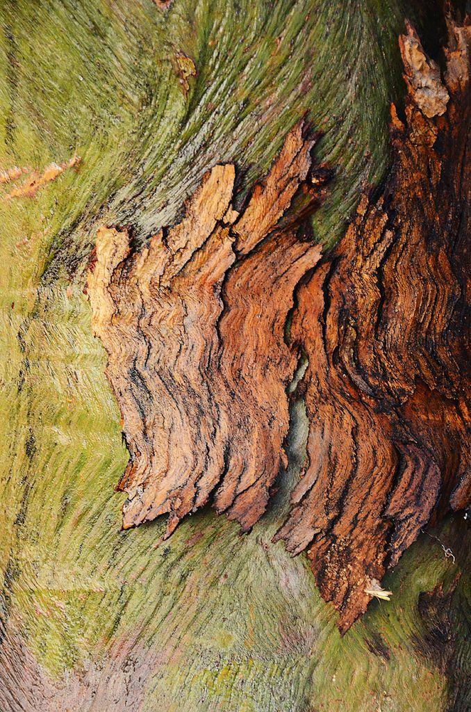 textura -----------------------------------------------------Tree Bark by J Allan-1