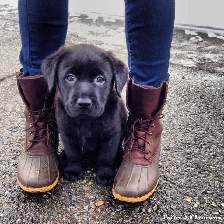 Can I please have this puppy...and her boots