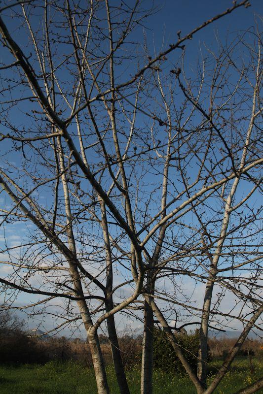 Summer in Winter - Argos - Timenio | Timenio