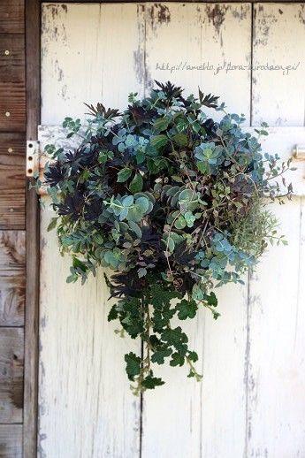 ブルーグレーのミセバヤ壁掛けハンギング | フローラのガーデニング・園芸作業日記