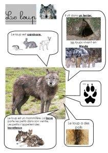 Fiches d'identité sur divers animaux... ce qu'ils mangent, leurs habitats, leurs empreintes et certaines particularités.