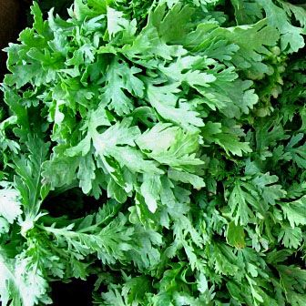 Edible Chrysanthemum  - (Chrysanthemum coronarium)
