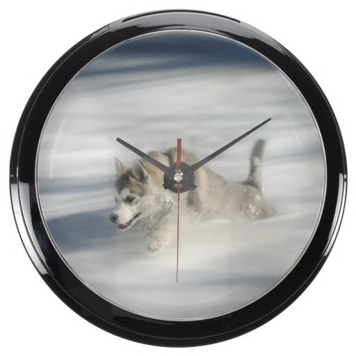 Flying in a Husky Dream Aqua Clocks