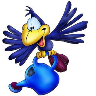 Funny Birds - Birds Images