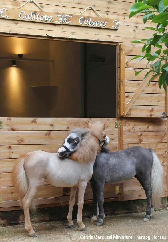 Gentle Carousel Miniature Therapy Horses.