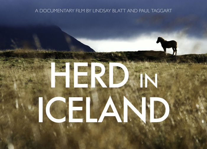 Herd in Iceland - Trailer for documentary film by Lindsey Blatt and Paul Taggart on the annual round up Icelandic horses allowed to roam free during the summer.