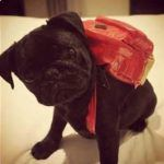 Backpacks and Dogs