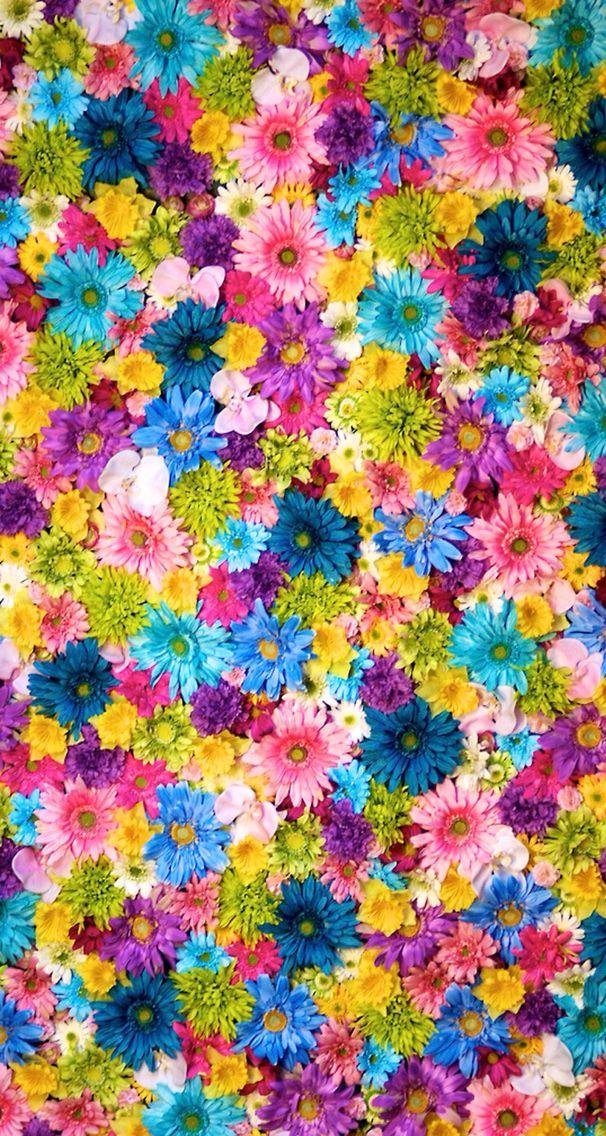 Colorful flower cute wallpaper ❤️