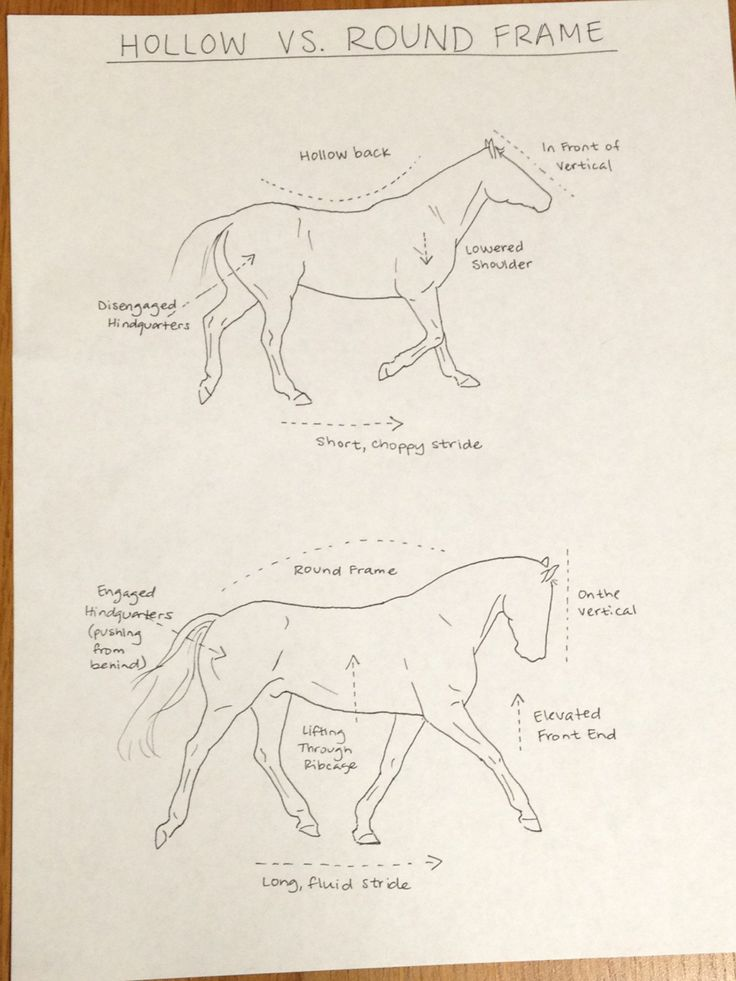 Hollow vs round frame horse diagram. (Now you finally get what your instructor is telling you)
