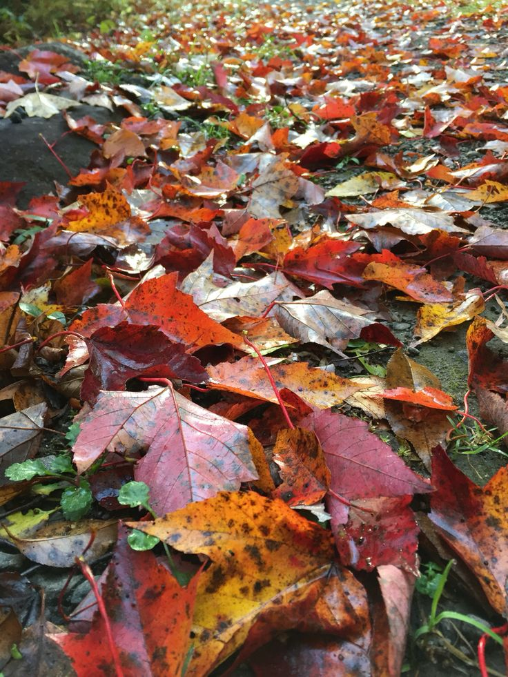 Leaves have fallen...