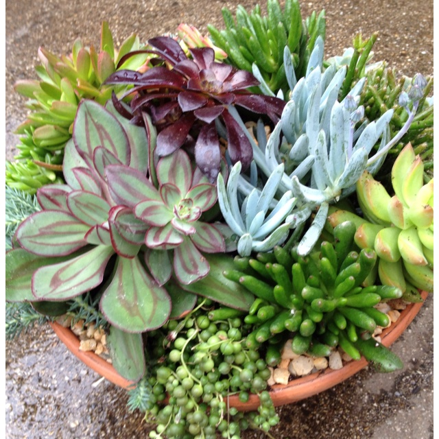 Beautiful Succulent Dish Garden By Carrie Kelly