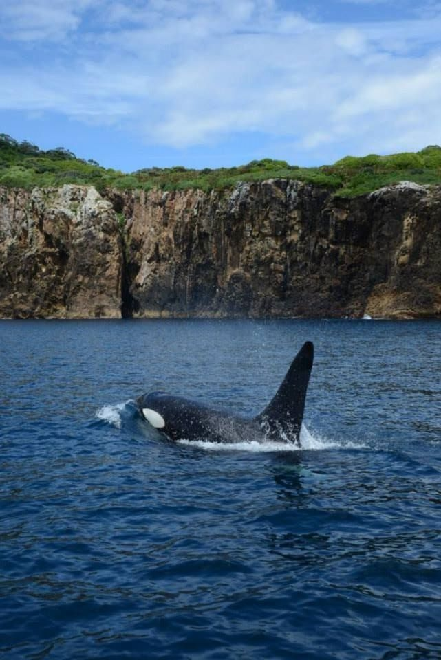 a study of killer whales So, you want to work on dolphins and whales well there is an endless number of problems to study the ocean is also in a crisis interested in becoming a marine biologist/trainer for killer whales right.