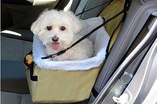 This little doggy pocket car seat that you'll wish you could snuggle into. | 19 Delightful Pet Products That You'll Love As Much As They Will