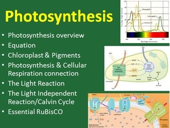 Photosynthesis - This 2 DAY, 56 slide Senior Biology PowerPoint Lesson package discusses both the light-dependent and light-independent reactions as well as the structure of chloroplasts and the variety of pigments found within plants. It also compares the process of photosynthesis to cellular respiration and takes a look at the most important enzyme on earth - RuBisCO. It includes the lesson, 8 embedded videos and a student lesson handout as a word document.