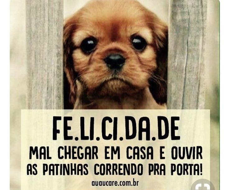 SENSAÇÃO DE PURA ALEGRIA E AMOR! ❤️ #filhode4patas #filhote #maedepet #paidepet #petshop #petmeupet #cachorro #gato