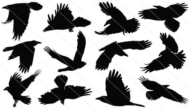 Raven Flying Silhouette Vector