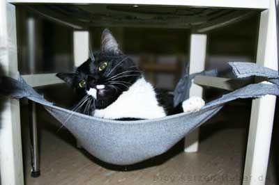 Stuhl Hängematte Katze selber machen