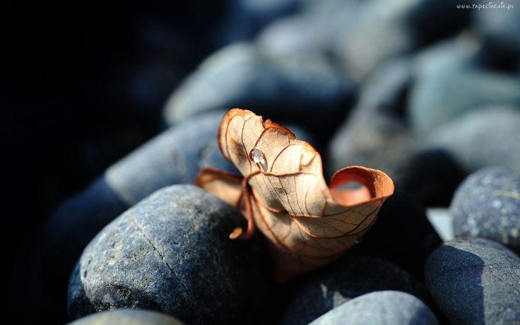 Kamienie, Suchy, Liść