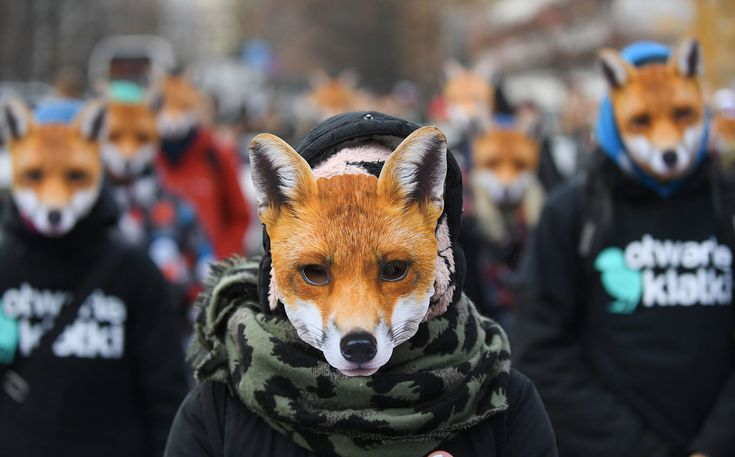 People wearing fox masks take part in the 'Day without fur' demonstration near the Polish Sejm headquarters in Warsaw, Poland; Greek Prime Minister Alexis Tsipras and US President Barack Obama enter the Greek Prime Minister's office in Athens, Greece; and, An Iraqi woman fleeing the fighting touches her country's national flag mounted on a security forces vehicle as she reaches an area held by Iraqi Special Forces 2nd division in the Samah neighbourhood of Mosul. These are just a few of the…