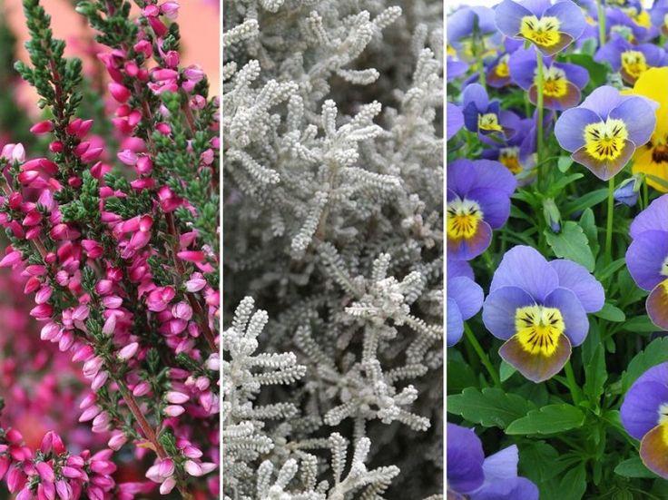 Ablakládák, amelyek ősztől tavaszig virágoznak