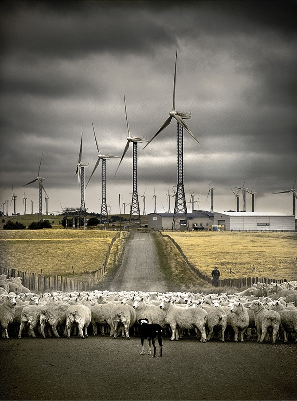 """© Wayne Rickard, Sheep and windmills    When Wayne Rickard drove past this scene on the top of the Tararua Range he thought it captured part of New Zealand's changing cultural identity: """"Agriculture versus industry, working towards a sustainable future"""".--> Share Your Photos On Travelflix http://visuworx.com/dev/travelflix/"""