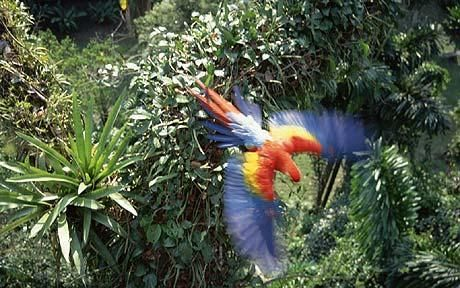 the amazon flowers | Between 20 and 40 per cent of the Amazon's trees are predicted to ...