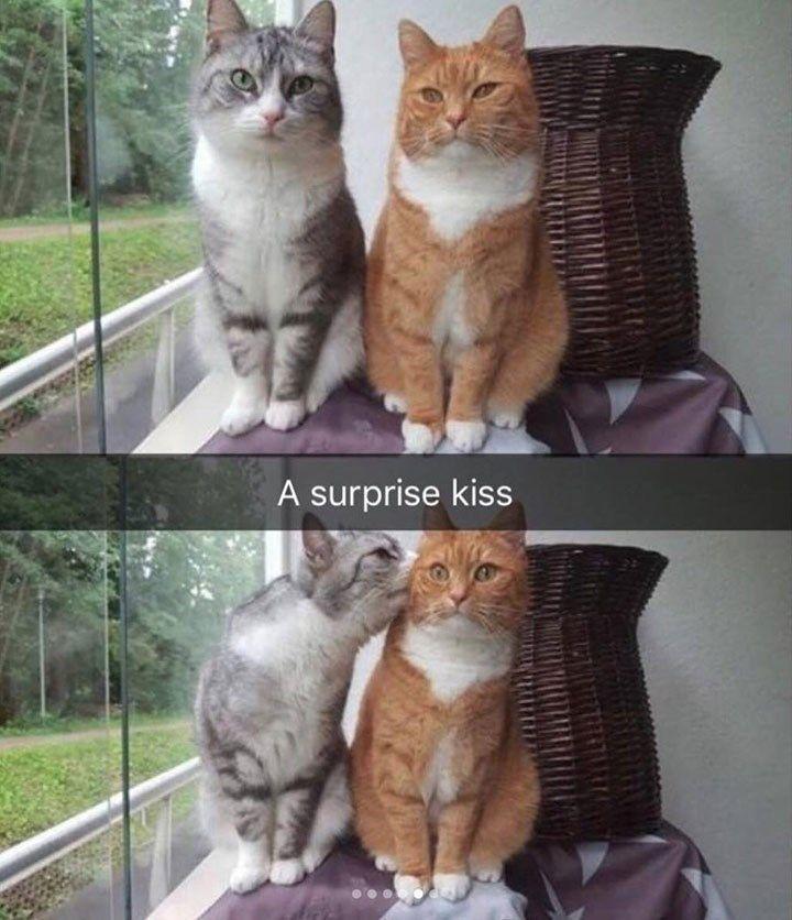 Aww! #aww # animals # funny animals # animal snapchats # sweet oder ich jedes mal s   – Süß