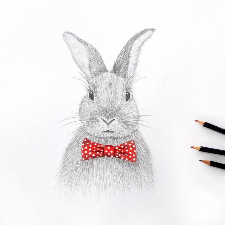 Easter bunny drawing // by Jacqui Humble