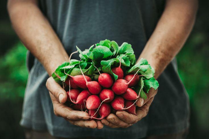 Syre og base i balanse for god helse. Den dramatiske økningen i vårt forbruk av foredlede matvarer, samt nedgangen i forbruket av frisk frukt og grønt har medført at den typiske vestlige dietten har blitt mer syredannende. Det viktigste du skal tenke på i følge Youngs teori, er å få i deg nok av de basedannende matvarene som grønnsaker, ikke animalsk protein, rå matvarer og rent vann. Og unngå syredannende matvarer som kjøtt, sukker , korn og gjær.  Dr. Fedon Lindberg støtter gjerne et slikt…