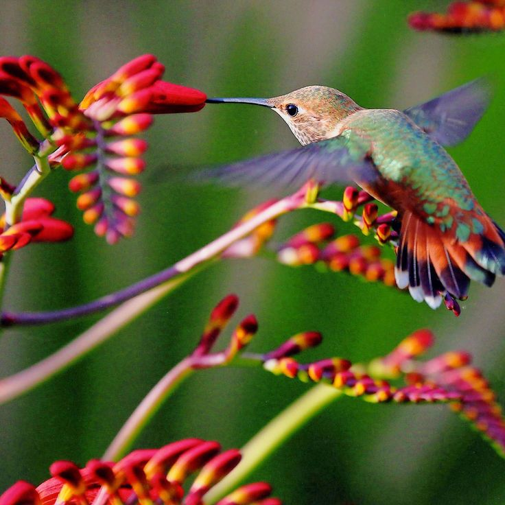 13 JawDropping Facts About Hummingbirds in 2020 Humming