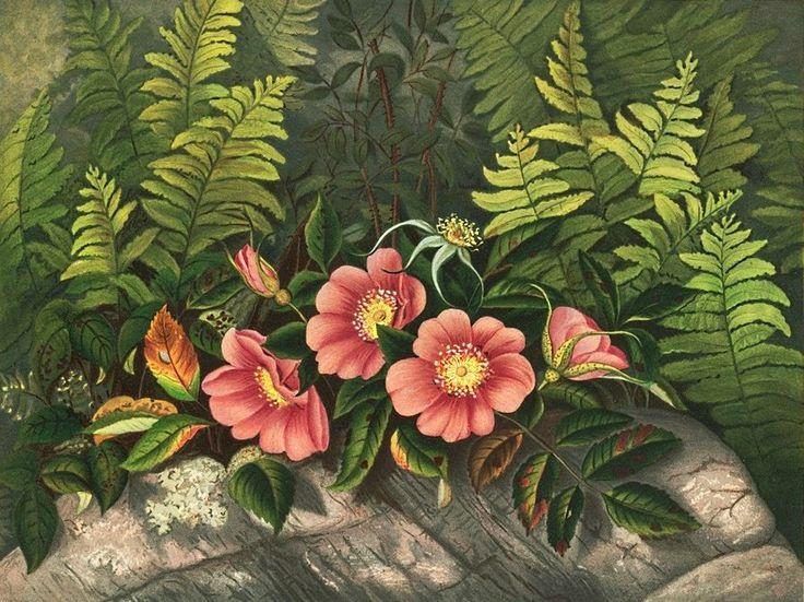 Схема вышивки «дикая роза» - Вышивка крестом