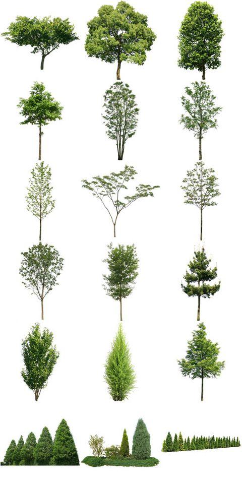 クスノキ、ネムノキ樹木素材無料