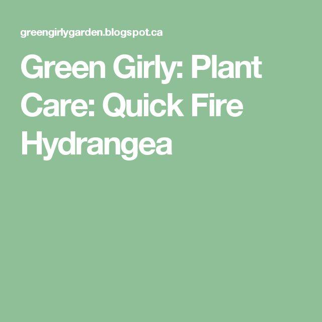 Green Girly: Plant Care: Quick Fire Hydrangea