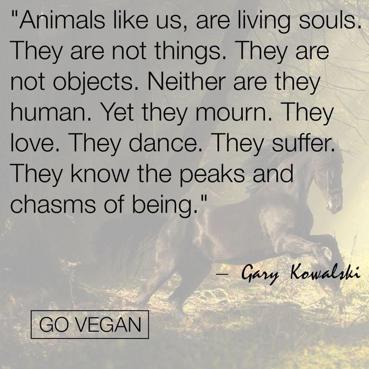 Best 25+ Animal Cruelty Quotes Ideas On Pinterest
