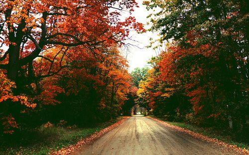 Autumn by ZacharySnellenberger on Flickr.