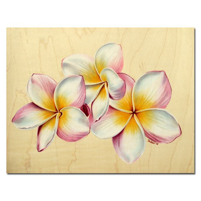 "PLUMERIA 21 Rainbow Yellow Pink Frangipani Tropical HAWAII flower colored pencils painting Sandrine Curtiss ORIGINALArt 8.5x11"" by Sandrinesgallery"