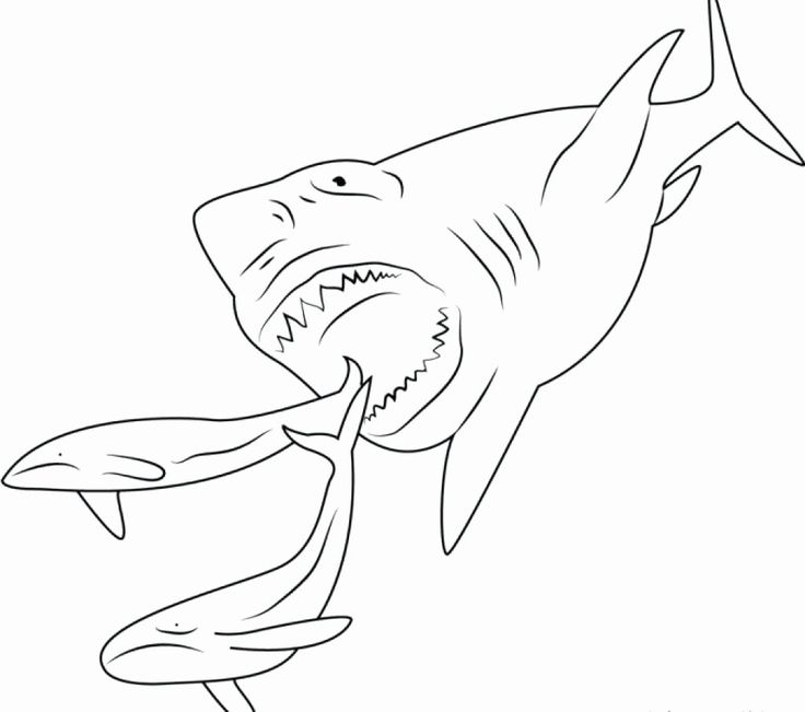 Scary Shark Coloring Pages Best Of Megalodon Coloring ...