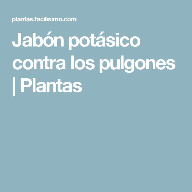 Jabón potásico contra los pulgones | Plantas