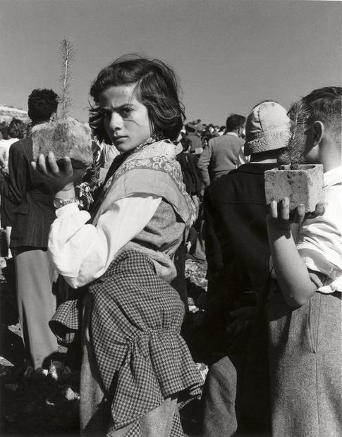 © Izis Bidermanas Piantagioni della foresta dei Martiri, Gerusalemme, Israele, 1953.