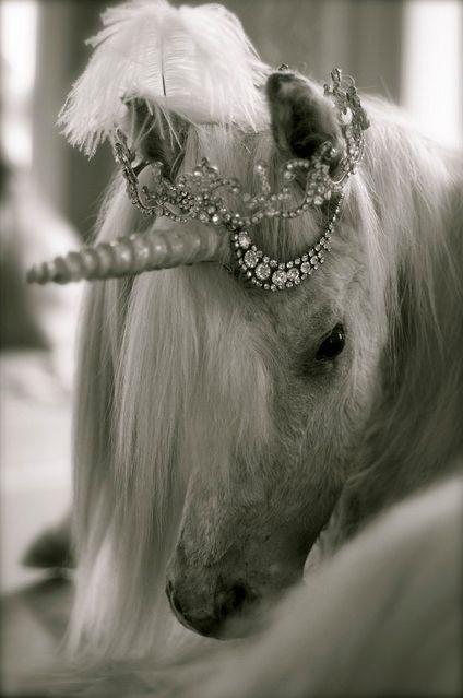 I need a unicorn tiara. Or just a unicorn.