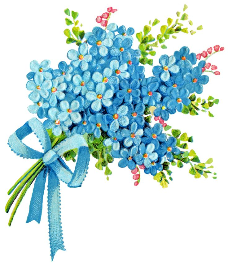 clip art forget me not flower - photo #43