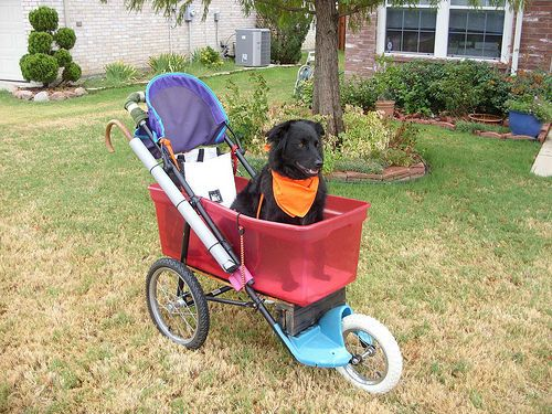 Turn A Baby Stroller Into A Dog Stroller- for those older dogs to still get their walks in?