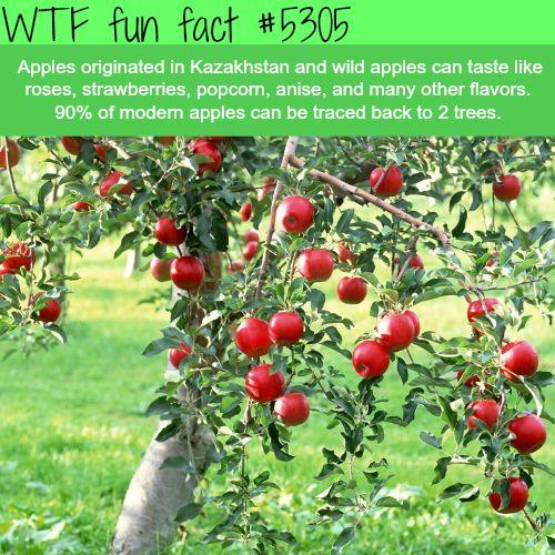 WHOA! ...Apples that taste like Strawberries, popcorn? - YES Please...  ~WTF fun facts