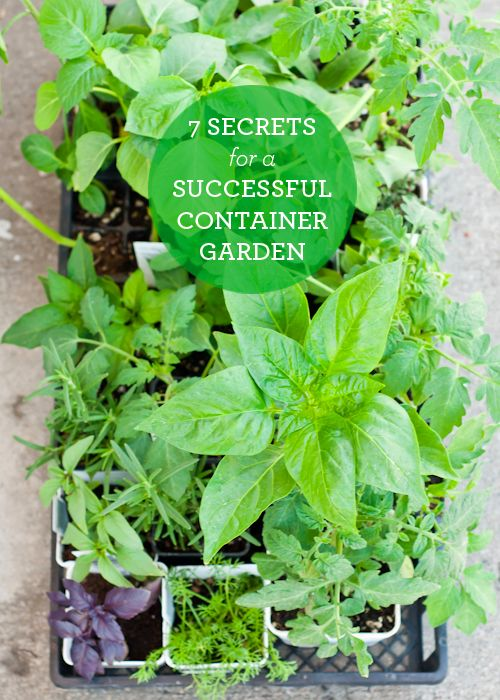 Everything you need to know to plant a Container Garden. Get planting!