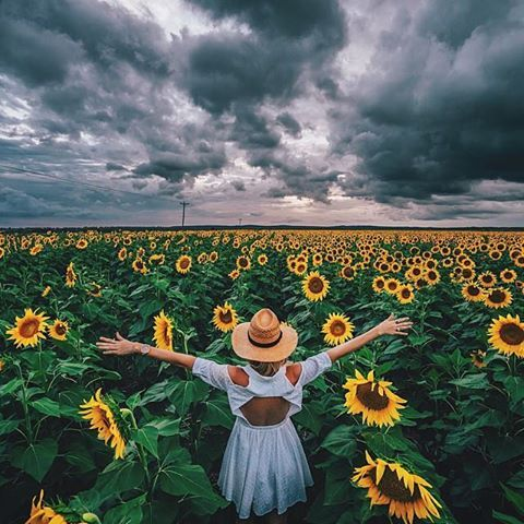 We absolutely love this picture and it's not too far from our park so you can create your own! Just ask at the front desk for instructions on how to get there. #kahleroasis #sunflowers #sunflowerfield