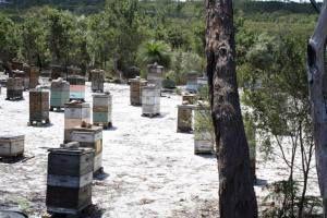 Bundjalung National Park Active Jellybush 17+ Honey (400g)