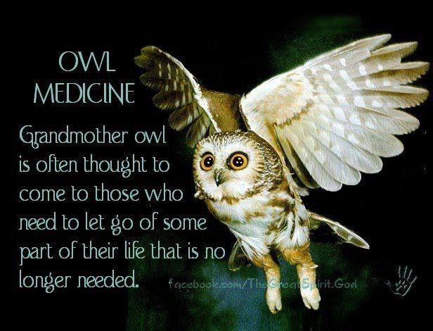 Animal Spirit Guide-Owl balancedwomensblog.com