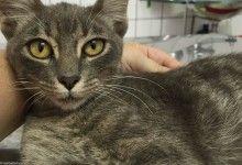 Resgatinhos, Nosso objetivo é resgatar, cuidar e conseguir bons lares para os gatinhos de rua de Campinas-SP | Brasil