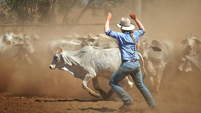 largest cattle stations in australia - Google Search